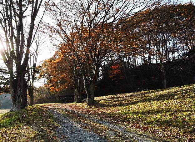 ケヤキは葉と影を落として