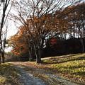 Photos: ケヤキは葉と影を落として