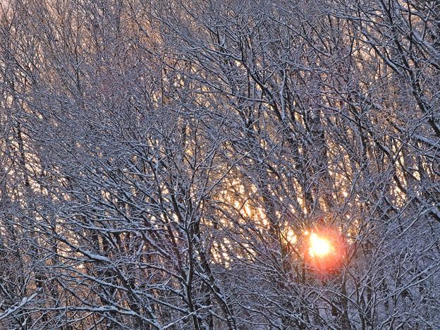 雪の木立を染めて