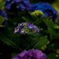 写真: 色に惑う