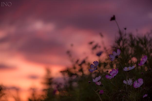 桜色の風景
