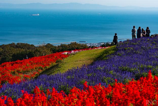 大阪湾を望む