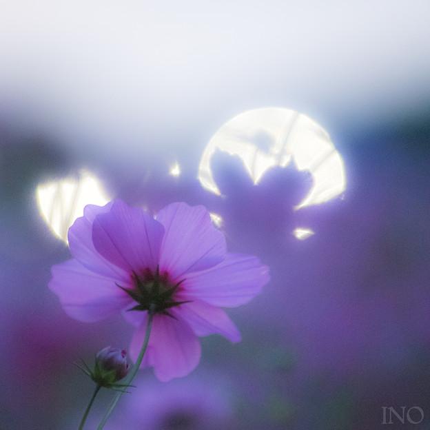宇宙も花も