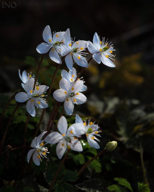 Spring Ephemeral