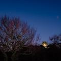 Photos: 夜梅(ヤバイ)