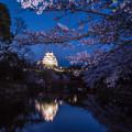 Photos: 桜2019