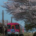Photos: 桜2018