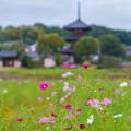 Photos: 郷秋
