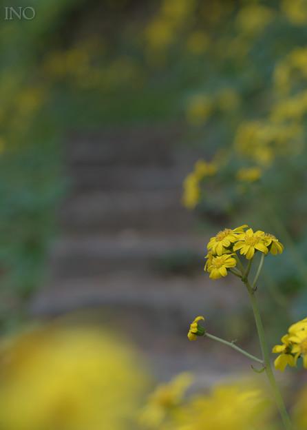 Photos: 石蕗道