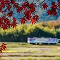 Photos: 秋の陽光