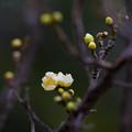 Photos: 春便り