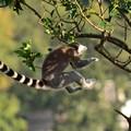 写真: DSC_2994 (2)  猿飛佐助