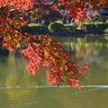 Photos: DSC_2492 薬師池公園の紅葉-1
