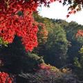 Photos: DSC_2495 薬師池の紅葉ー2
