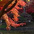Photos: DSC_2503 薬師池の紅葉ー4