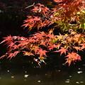 Photos: DSC_2457 薬師池の紅葉ー6