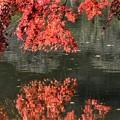 Photos: 湖面の鏡 DSC_2507 (2)