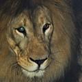 突然暗がりの中から現れた獅子 DSC_9791 (2)