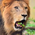 ライオン君は木の葉も食べる?