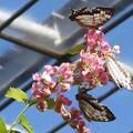 Photos: DSCN2126 (2) 花と蝶