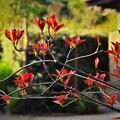 Photos: DSC_4215 (2) 紅葉