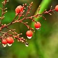 Photos: 赤い実は皆喜んでます DSC_4330 (2)