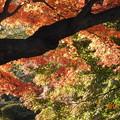 Photos: 眩い紅葉 DSCN2970
