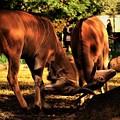 エランドという動物の奇妙な戦い? _DSC0150 (2)