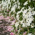 Photos: 春の星