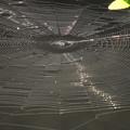 Photos: 蜘蛛の網 (巣)
