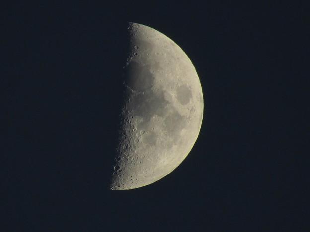Photos: 月齢6.3  上弦の月