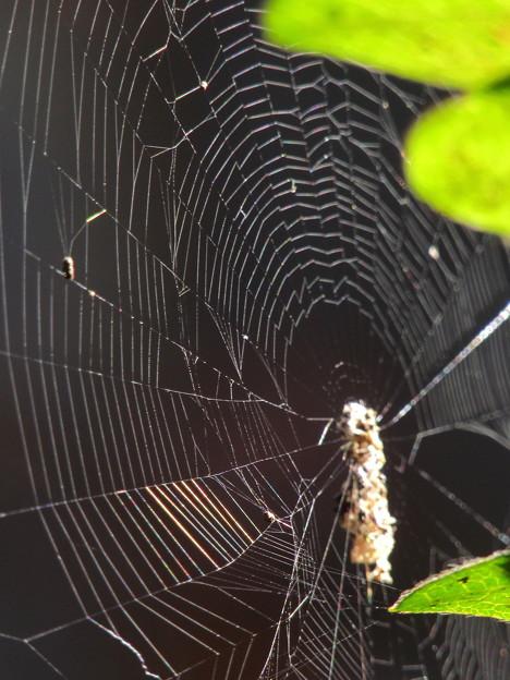蜘蛛の巣のア-ト?