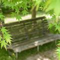 写真: 新緑に覆われて