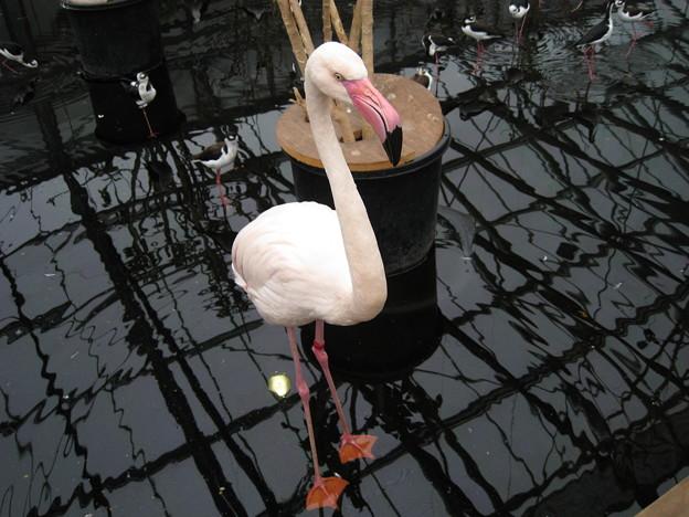 掛川花鳥園にて