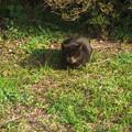 Photos: クマ猫?