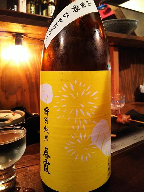 春霞 栗ラベル黄 特別純米酒 山田錦ひやおろし