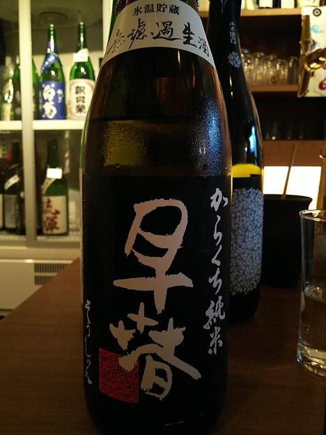 早春 からくち純米 氷温貯蔵 無濾過生酒