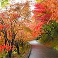 写真: もみじ寺の秋