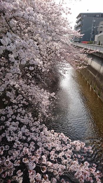 石神井川♪