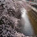 Photos: 石神井川♪