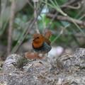 Photos: オレンジBOY♪