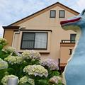 Photos: あじさい恐竜♪