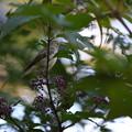 Photos: 紫つぶつぶ食堂♪