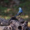 Photos: 青い背中♪