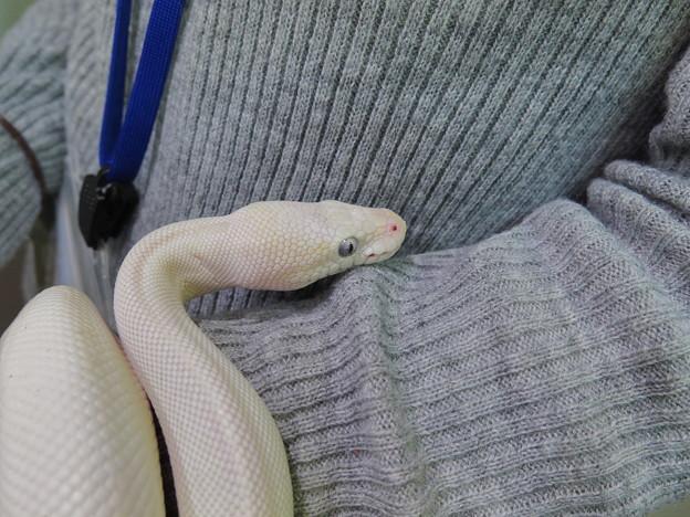 甘えん坊なヘビちゃん♪