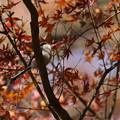 Photos: 紅葉も終わりねぇ~
