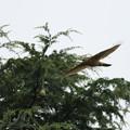 BIRD7762