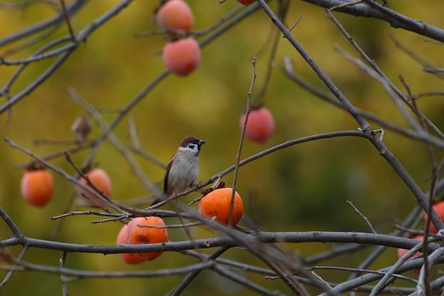 Photos: 鳥の皆さん~♪