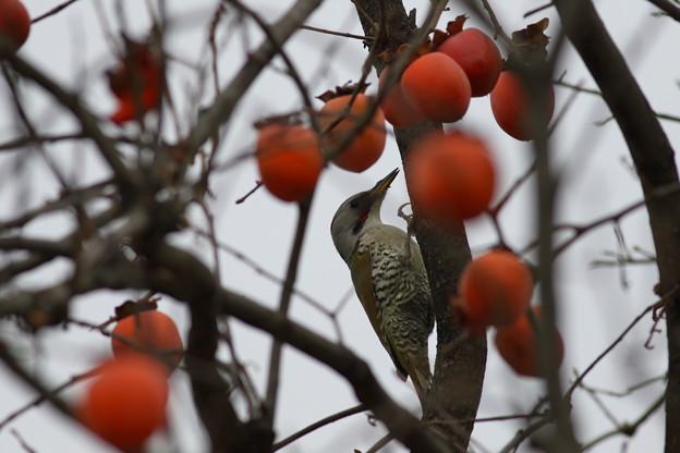 柿のシーズン♪