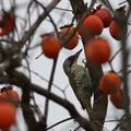Photos: 柿のシーズン♪
